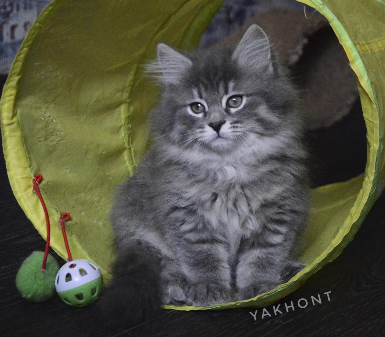 Yakhont