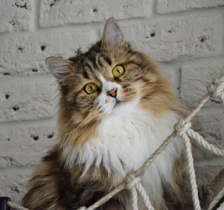 cats07.02.21 107-01