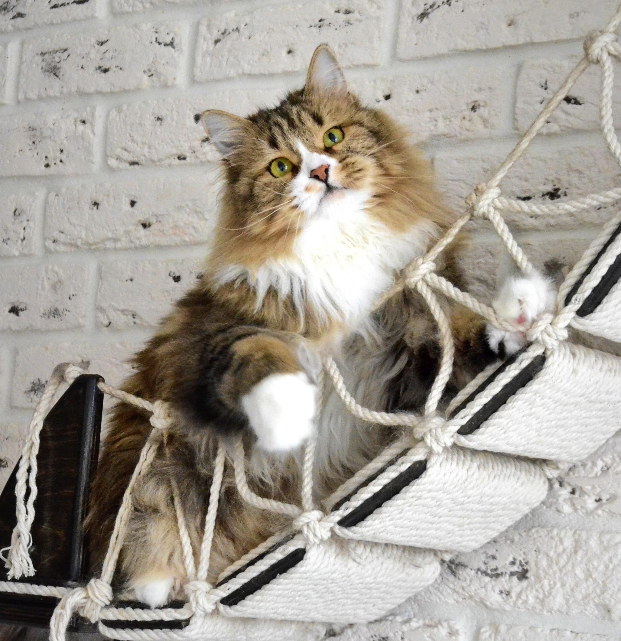 cats07.02.21 137-01