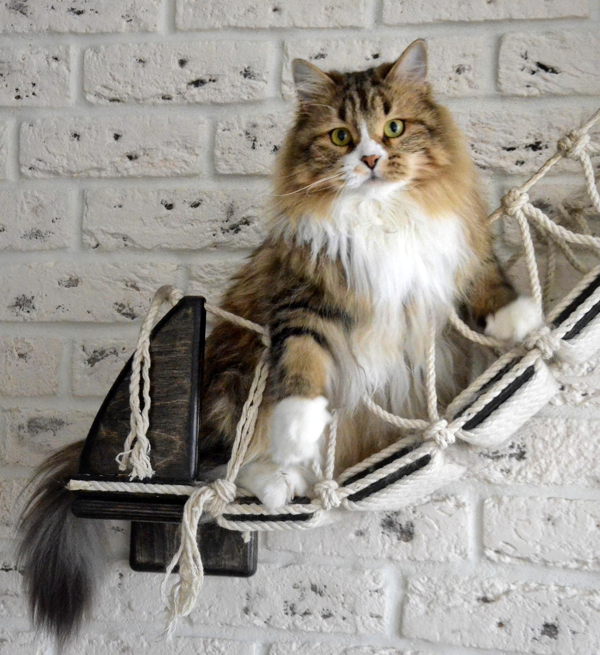 cats07.02.21 144-01