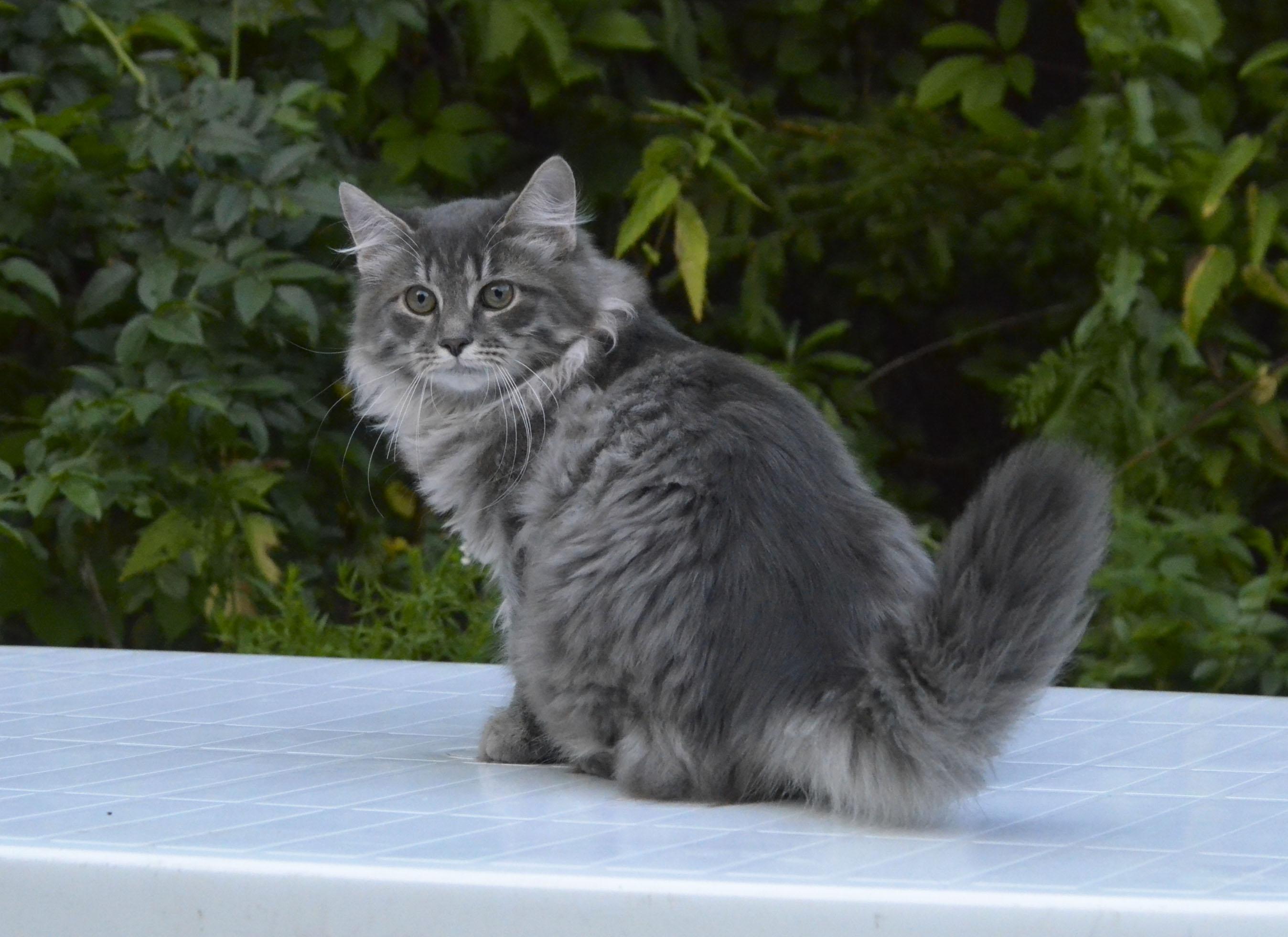 kitten 047