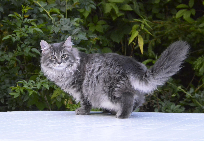 kitten 082