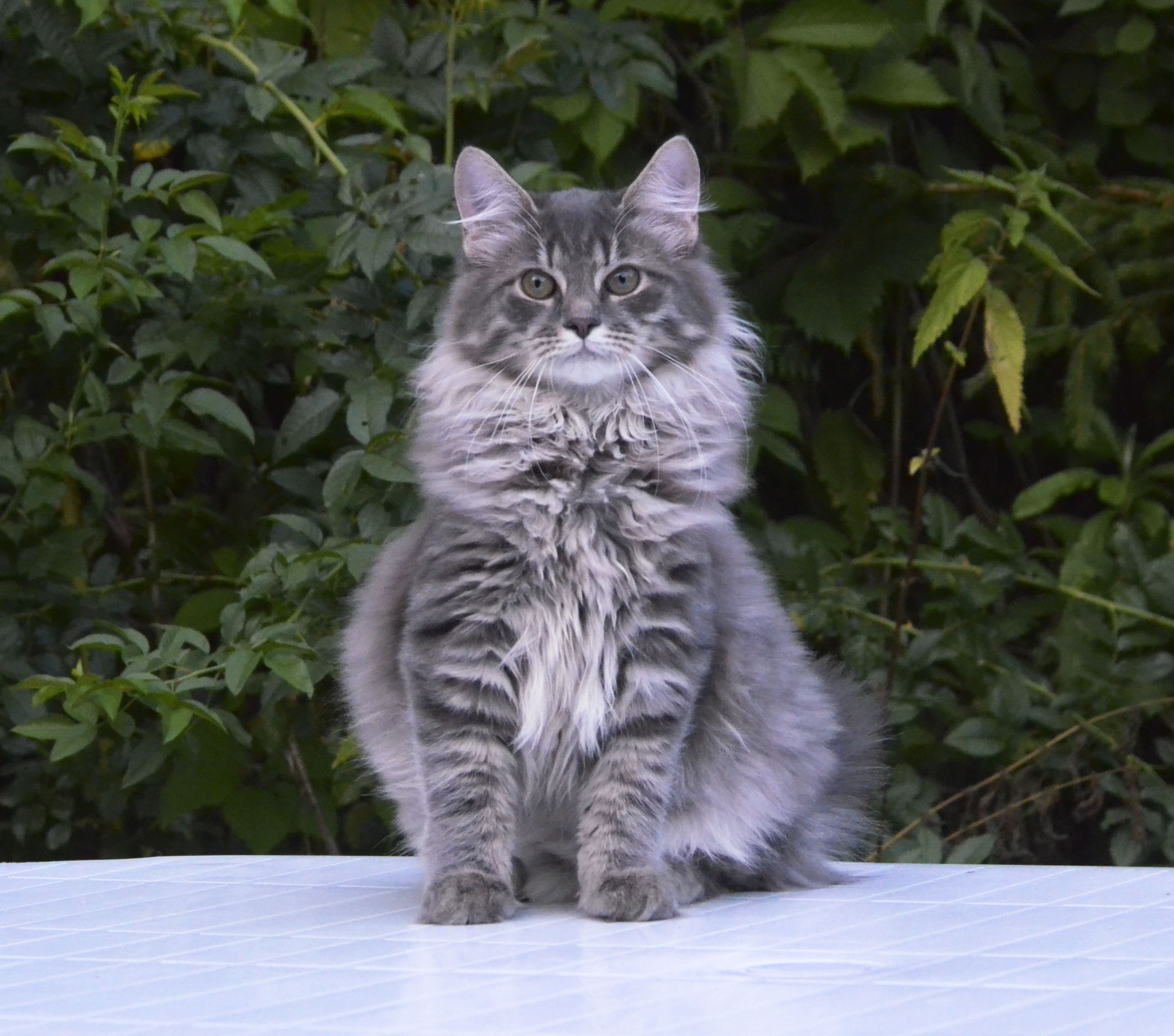 kitten 093