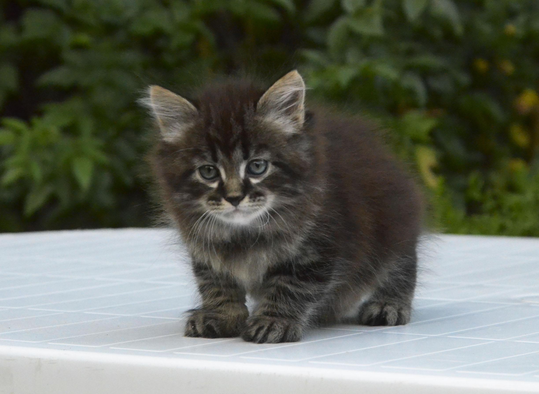 kitten 465