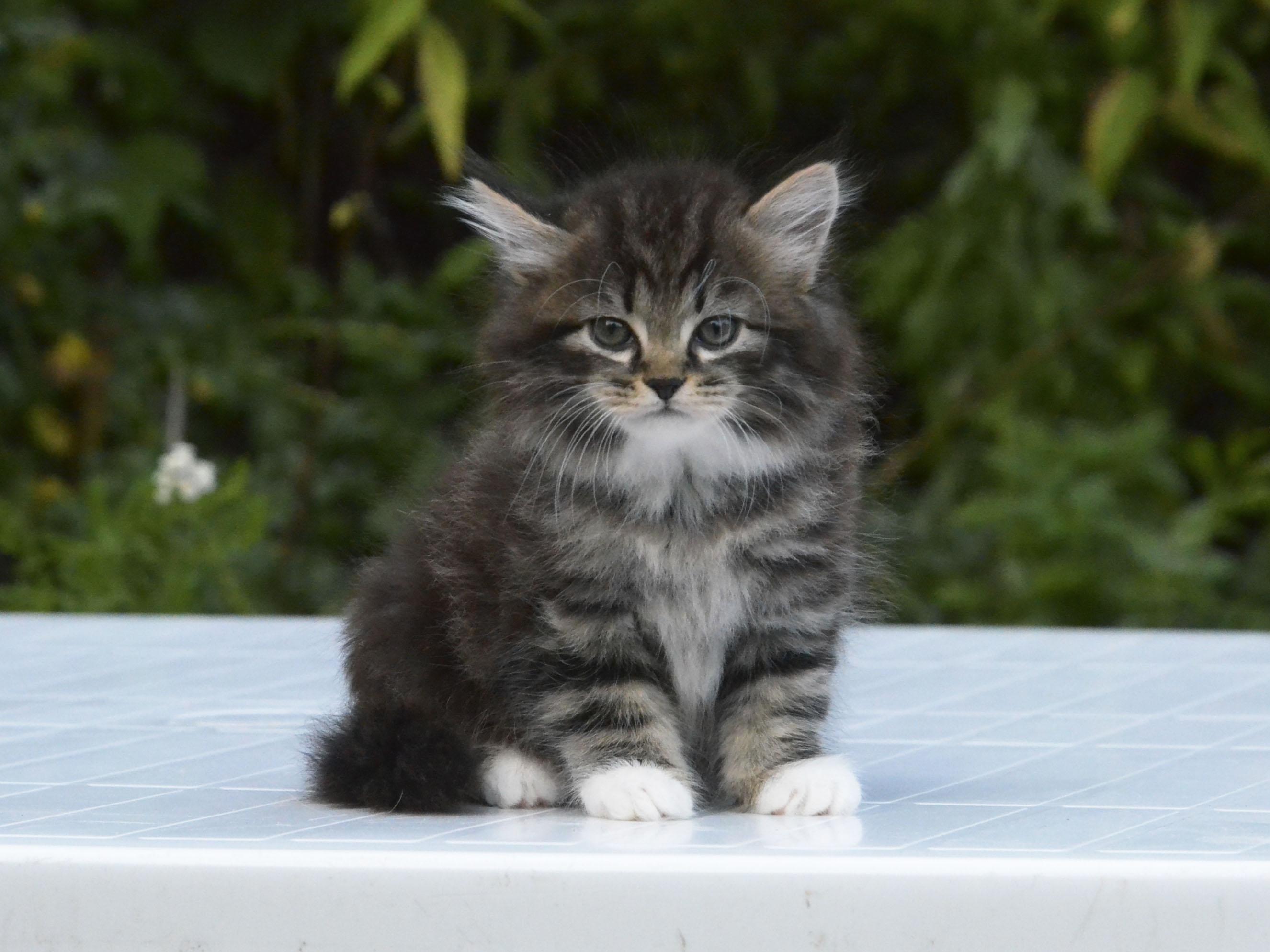 kitten 579