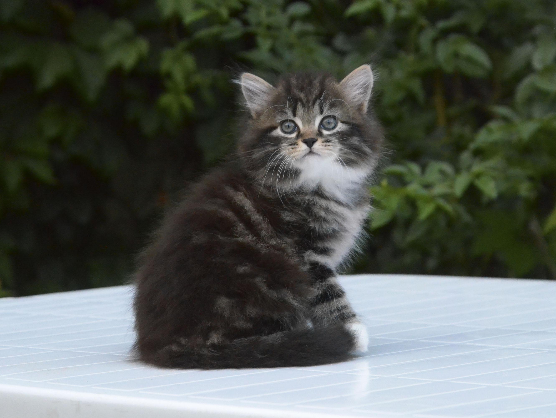 kitten 648