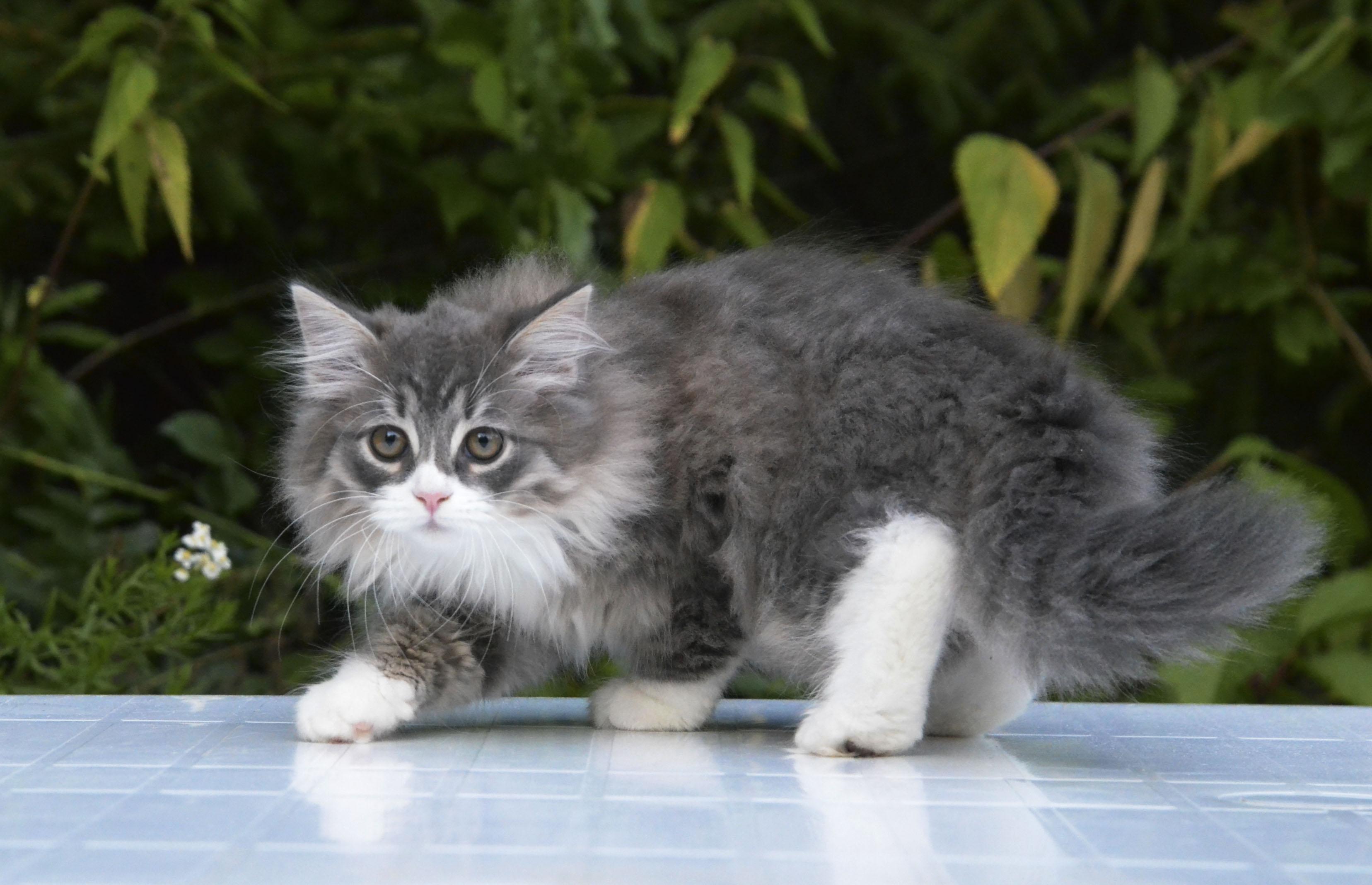 kittens 026