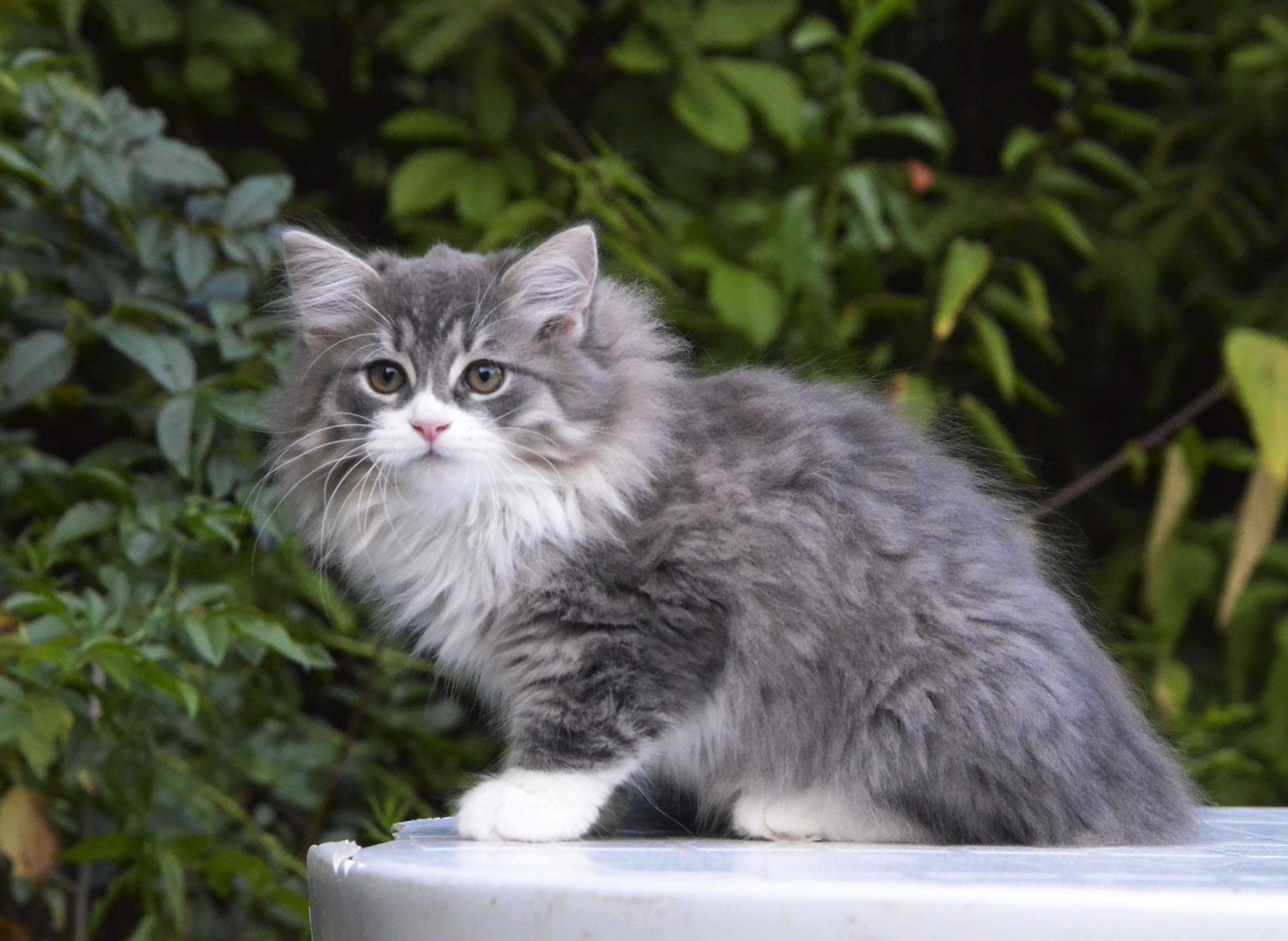 kittens 043