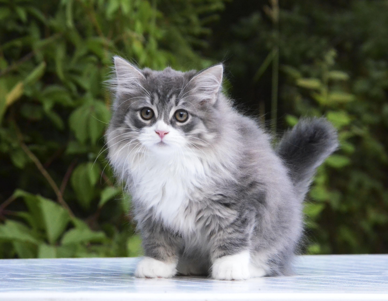 kittens 046