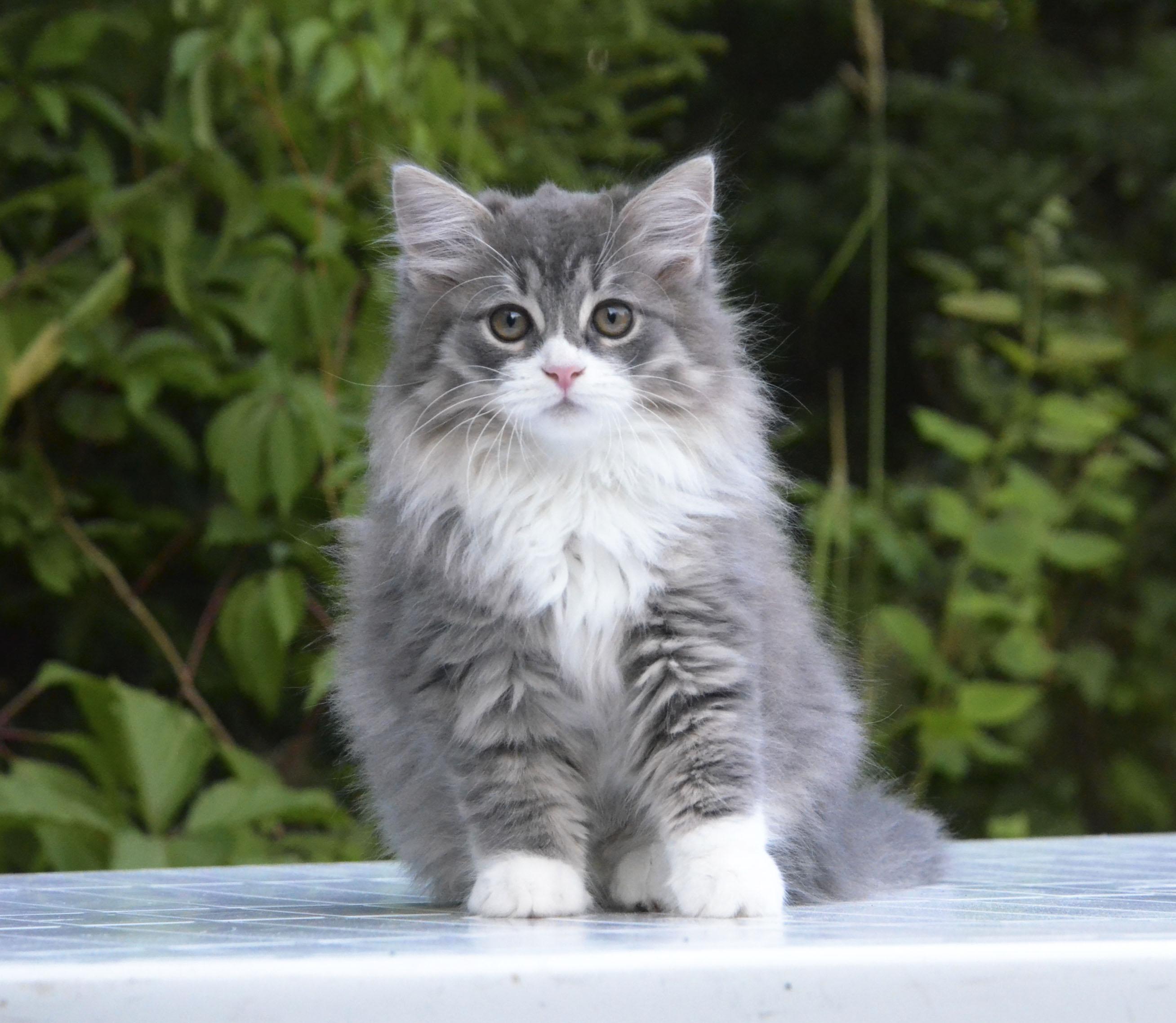 kittens 054
