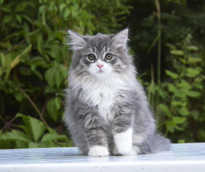 kittens 055