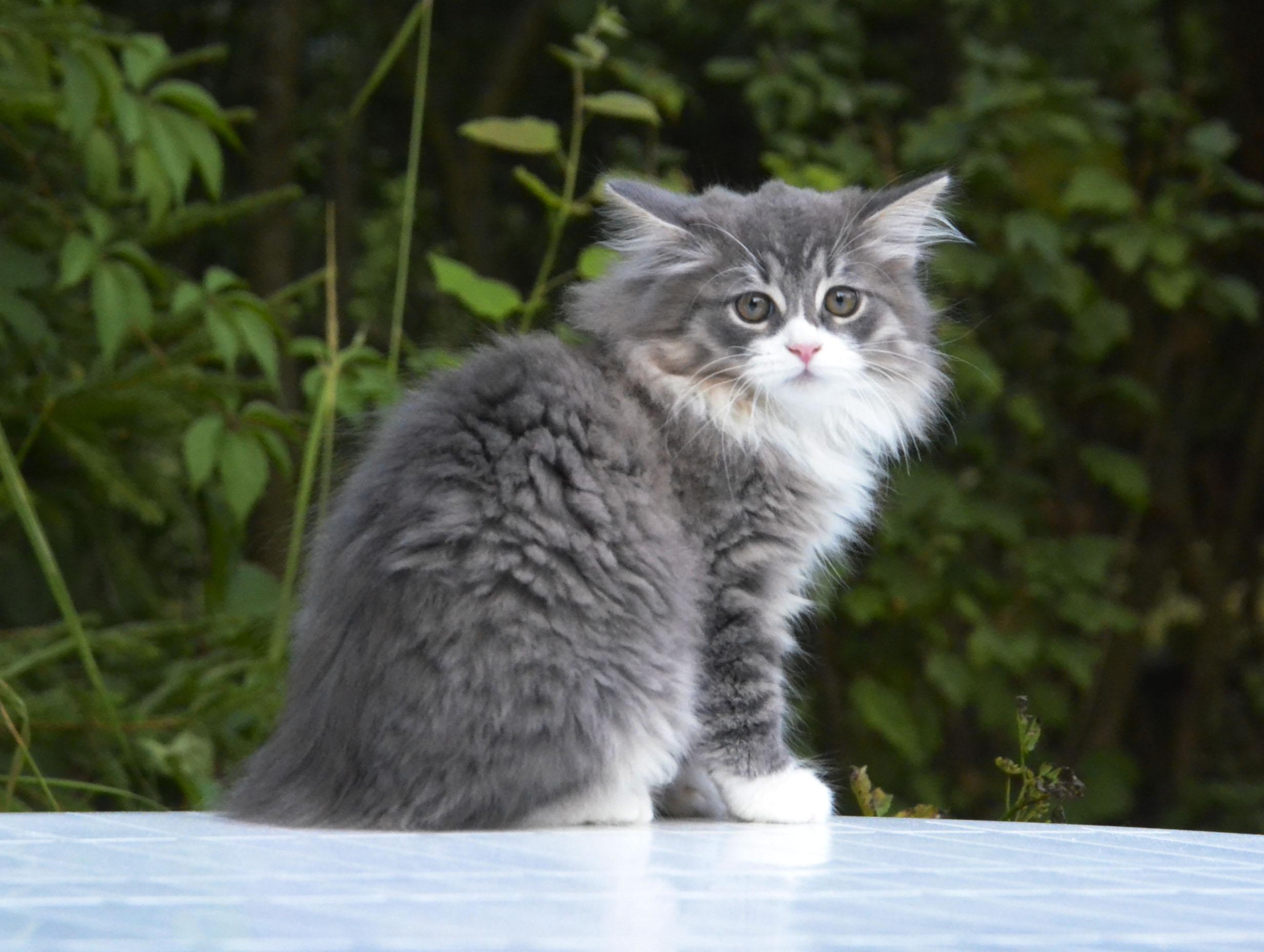 kittens 091