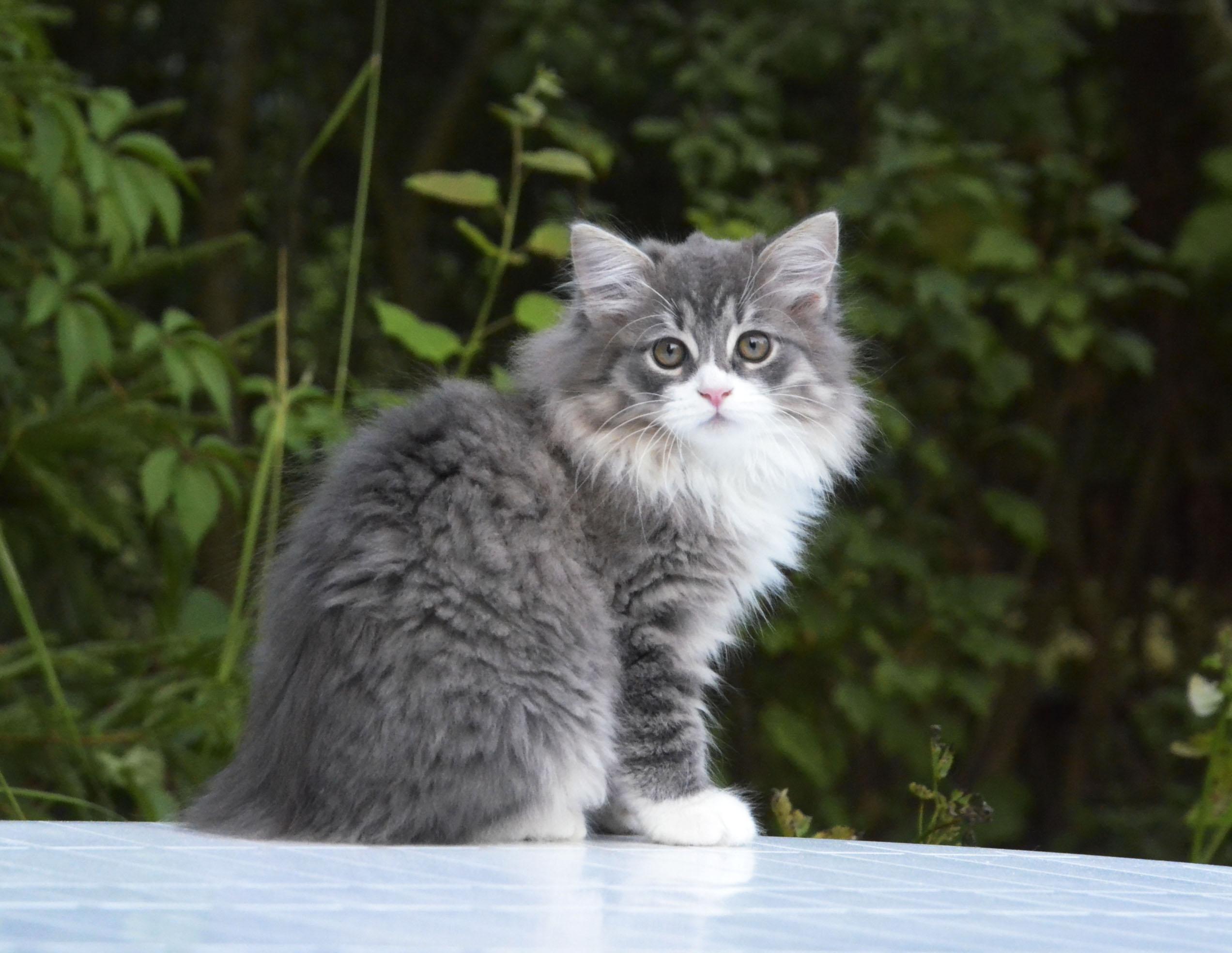 kittens 093
