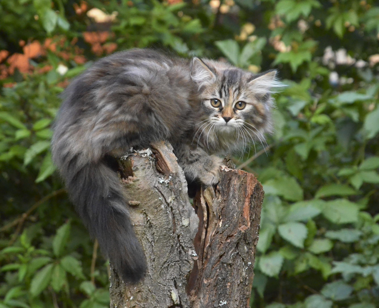 kittens 239